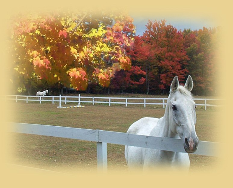 Autumn In Vermont.........