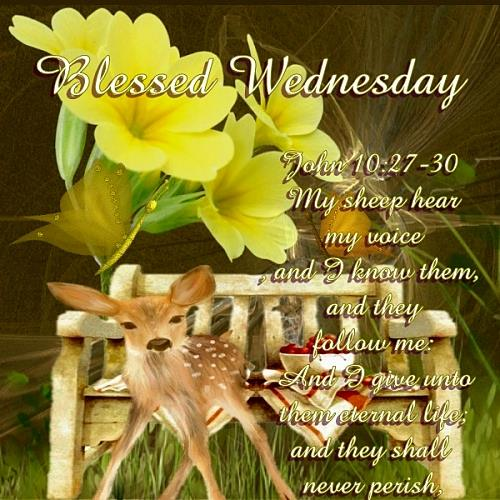 Blessed  Wednesday.......
