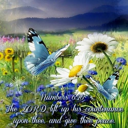 Numbers 626 KJV The Lord Lift Up His Countenance Ecard