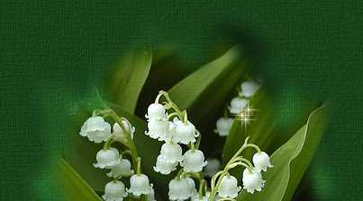 Main Image Top