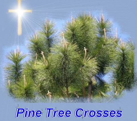 pine tree crosses......